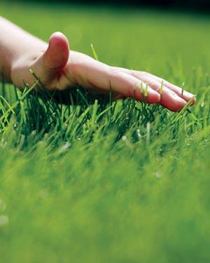 Ковер из травы